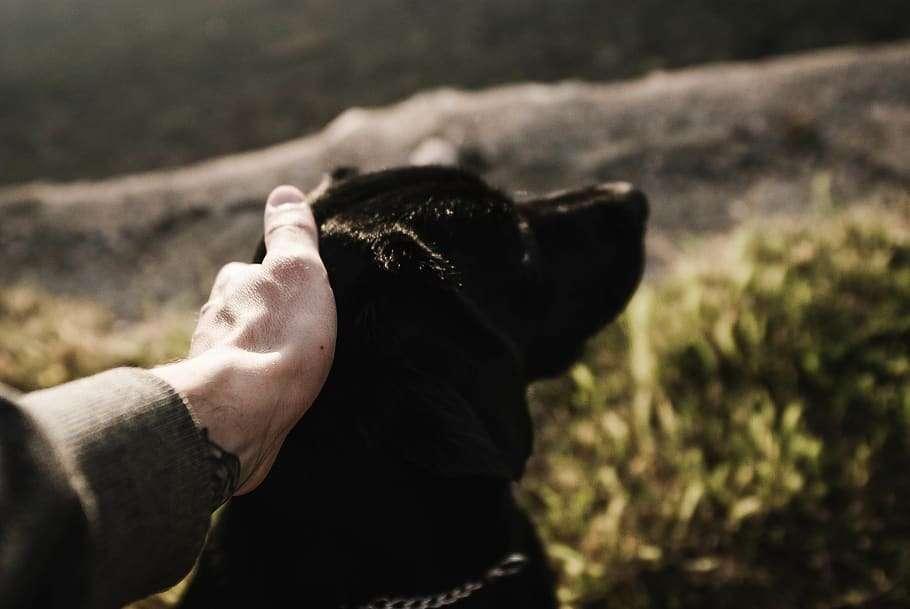 croatia-rab-doggo-dog-9830876